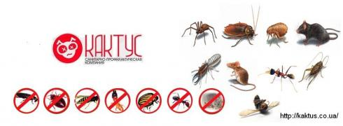 100% get rid of the pests