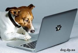 Cynologist from Kolomyia, dog training, online consultations